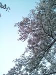 2017-04-08T14:00:53.jpg